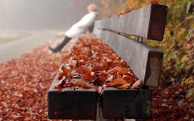 Картинка листья, осень, скамья, улица