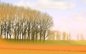 Обои поле, небо, деревья, дымка