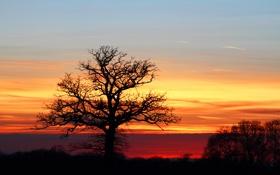 Обои небо, закат, дерево, силуэт