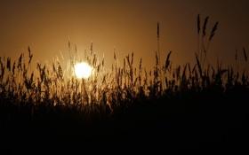 Картинка солнце, закат, тень