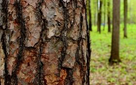 Картинка green, tree, bark, Close up