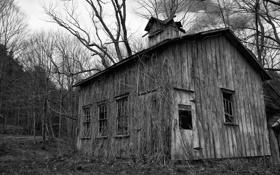 Обои осень, лес, деревья, чёрно белое, старый дом, мрачно