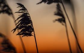 Картинка небо, закат, природа, ветер, растение
