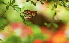 Картинка блики, бабочка, листва, ветка