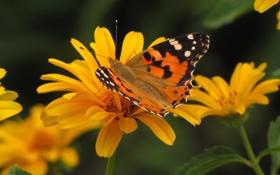 Картинка лето, бабочки, цветы, насекомые