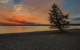 Картинка природа, озеро, дерево, берег