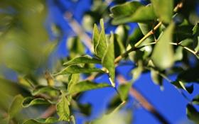 Обои зелень, листья, макро, свет