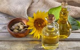 Обои цветок, масло, подсолнух, оливки