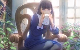Картинка цветы, книги, Девушка, окно, стул, кружка, чашка