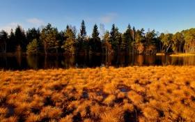 Обои лес, река, трава, осень, желтая
