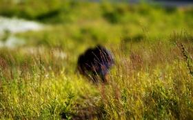 Обои трава, люди, полянка, дудинка