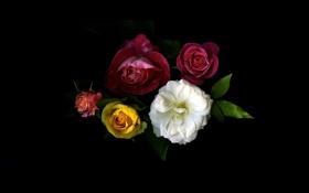Картинка листья, свет, фон, обои, розы, тень, букет