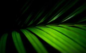 Картинка листья, макро, фото, зелёный, green macro