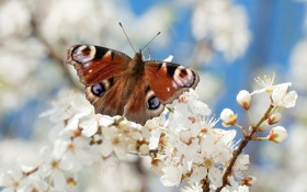 Обои бабочка, дерево, цветы