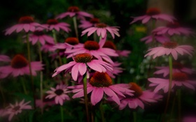 Картинка лес, лето, макро, цветы, природа, парк, фото
