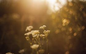 Картинка цветок, макро, закат, блики, растение, освещение
