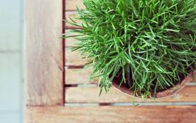 Обои трава, растение, зеленая