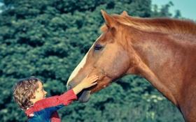 Обои малчик, настроение, конь