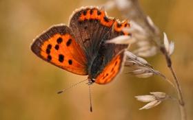 Обои узор, бабочка, растение, крылья, мотылек