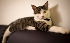 Картинка кошка, кот, отдых, лежит