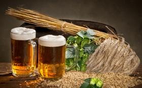 Обои бокал, пиво, колосья, glass, пшено, пенка, beer
