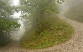 Картинка дорога, лес, туман, тропа, утро, холм