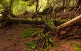 Обои лес, деревья, природа, корни, заросли, земля, мох