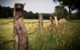 Обои лето, природа, фон, обои, забор, растения, колоски