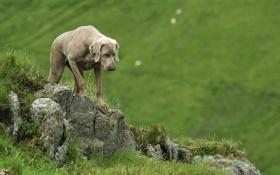 Обои лето, природа, собака