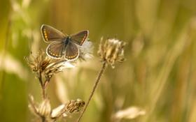 Картинка лето, трава, макро, природа, фон, обои, бабочка