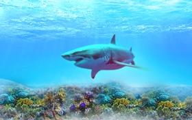 Обои море, вода, цвет, акула, кораллы
