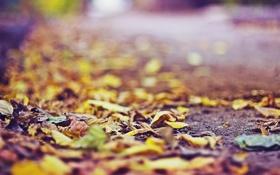 Картинка осень, асфальт, листья