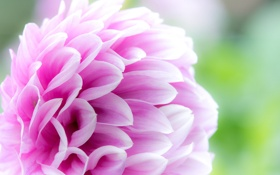 Картинка цветок, краски, лепестки, сад, бутон