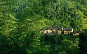 Обои дом, лес, зеленый