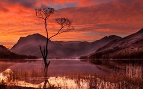 Картинка небо, облака, горы, озеро, дерево, зарево