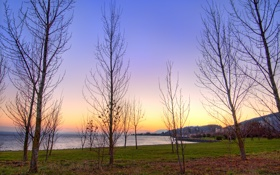 Обои небо, деревья, вечер