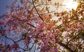 Картинка природа, весна, дерево, цветы