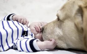 Обои друг, дом, уют, ребёнок, нежность, собака