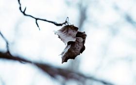 Обои холод, зима, листья, капли, макро, природа, капельки