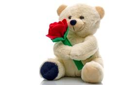 Обои игрушка, мишка, плюшевый, bear, teddy