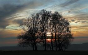 Картинка небо, деревья, пейзаж, закат