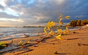 Картинка песок, море, пляж, небо, листья, вода, ветки