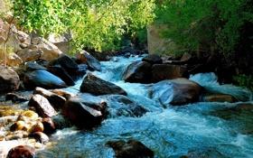 Обои зелень, вода, природа, камни, фото, растения, обои на рабочий стол