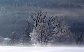 Картинка зима, поле, деревья, пейзаж, туман