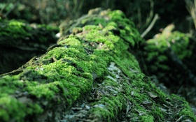 Обои мох, ствол, кора, дерево