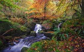 Картинка осень, лес, листья, река, ручей, водопад, Природа