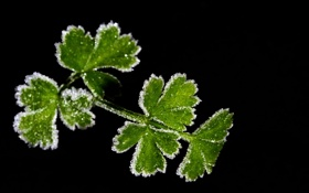 Обои иней, листья, растение, кристаллы