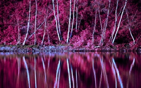 Обои осень, деревья, озеро, отражение, склон