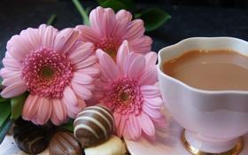 Обои цветы, чай, молоко, конфеты