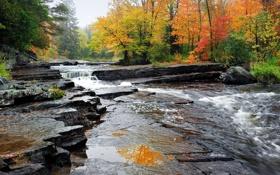 Обои осень, лес, деревья, ручей, камни, течение, США